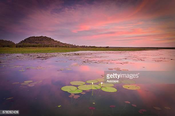 Cooper Creek Billabong at dusk Mount Borradaile Awunbarna Arnhem Land Northern Territory Australia