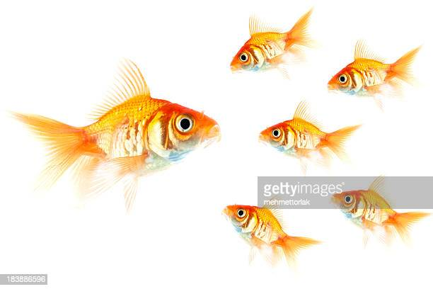 cooperation concept - big fish stock pictures, royalty-free photos & images
