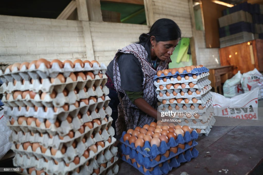 Cooperative farmer Luisa Huinel collects eggs on February 11, 2017 in the western highlands town of Cajola, Guatemala. Some 70 percent of the men in the town have left to work as undocumented immigrants in the United States, many of them leaving behind their families. Grupo Cajola, an NGO funded by American donations, organized the cooperative to help improve the local economy and reduce the need for emigration to the United States. With U.S. President Donald Trump's crackdown on illegal immigration, the spectre of increased deportations back to Guatemala and reduced remittances has added a sense of urgency to transfoming the local economy. Remitances from undocumented Guatemalan laborers are the main source of income of Guatemala, and while increasing wealth and driving a housing boom in towns like Cajola, they have also had the negative effect tearing the social fabric of local communites. Grupo Cajola has set up a weaving center, an egg farm, carpentry shop, internet cafe, library and education programs for pre-schoolers and their parents, while providing scholarships for more than 20 young residents to learn local trades. Textiles they produce are now exported for sale to the U.S. The NGO was founded in 2000 by Eduardo Jimenez, who lived as an undocumented immigrant for 10 years in the U.S. before returning to Guatemala. He coordinates locally with the group's American director Caryn Maxim, who organizes funding and product sales in New Jersey.