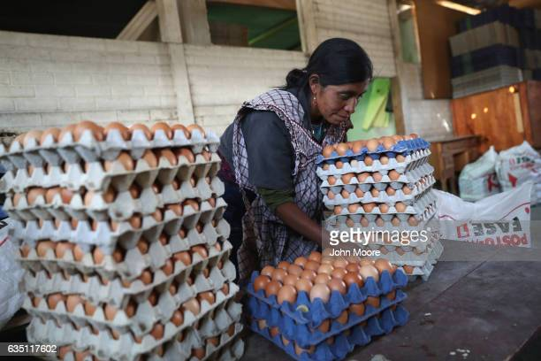 Cooperative farmer Luisa Huinel collects eggs on February 11 2017 in the western highlands town of Cajola Guatemala Some 70 percent of the men in the...