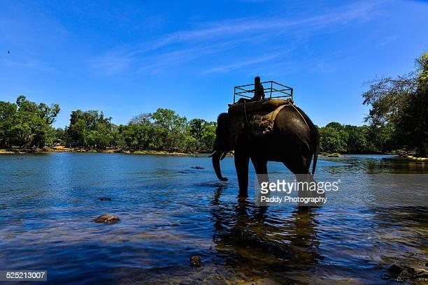 coorg, dubare elephant camp - karnataka stock pictures, royalty-free photos & images