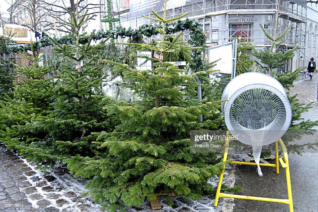 Christmas Trees For Christmas Celebrations 6 Dec. 2012