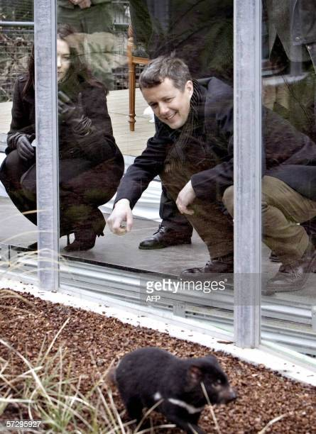 Crown Prince Frederik and Australian-born Crown Princess Mary of Denmark look 10 April 2006 at four Tasmanian devils received by the Copenhagen Zoo,...