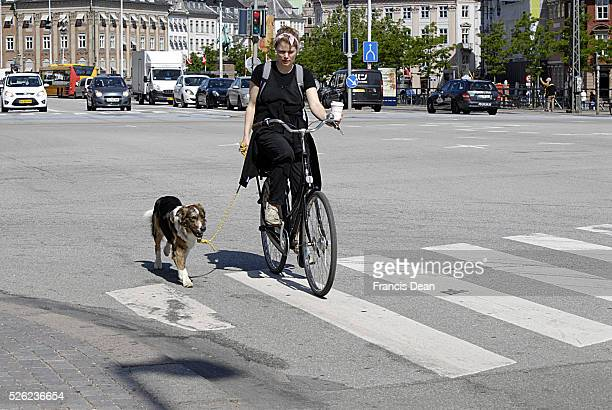 Copenhagen / Denmark. Danish bikers run with pet dog and drink coffee while ride on cycles 4 June 2013