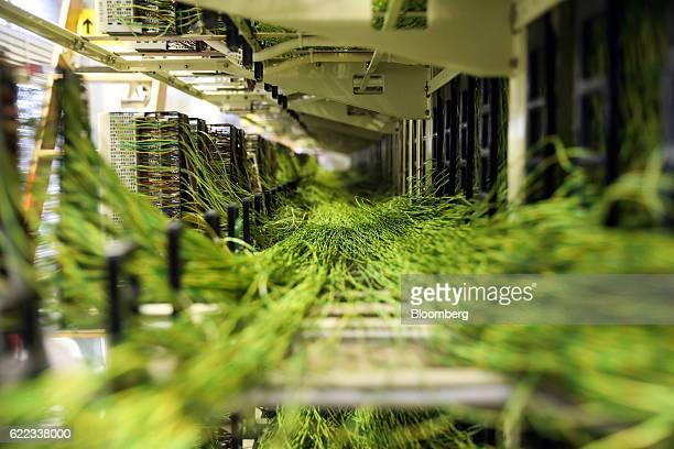 Copper wires lie in a rack at a BT Group Plc exchange building in Upminster UK on Thursday Nov 10 2016 Regulator Ofcom called on BT the UK's former...