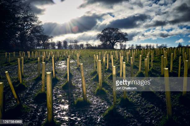 a copse of newly planted trees in park land on the outskirts of london - tree stock pictures, royalty-free photos & images