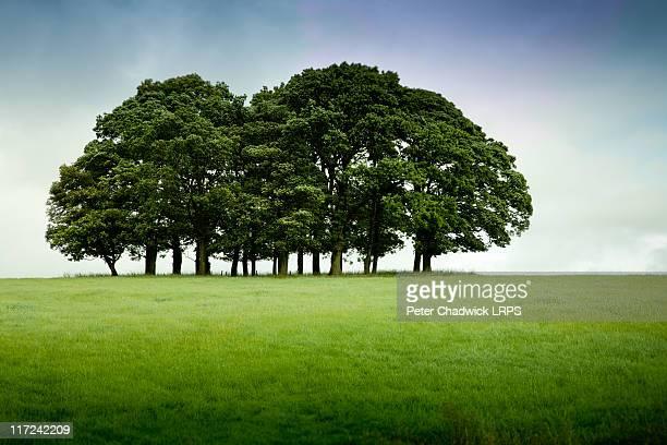 Copse of trees on near horizon.