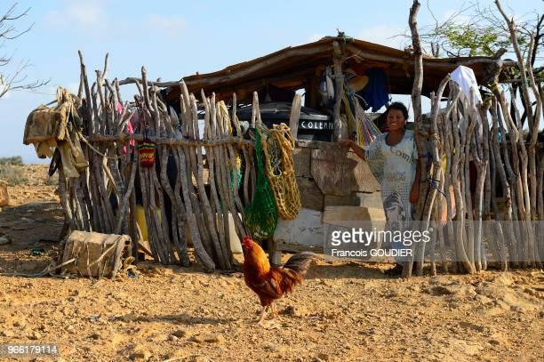 Coq devant une maison traditionnelle dans un village près de Punta Gallinas dans la région de la Guajira 20 mars 2015 Colombie