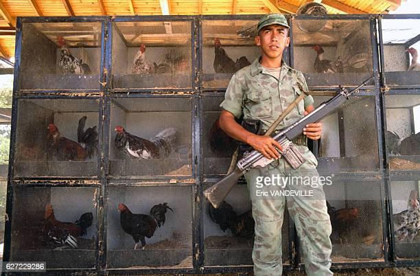 Coqs destinés au combat dans une propriété appartenant au narcotrafiquant Gonzalo Rodriguez Gacha surnommé 'Le Mexicain' l'un des chefs du cartel de...