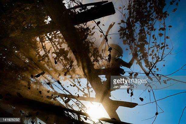 "Cora Indian man dismantles ""ramada"", a temporal shack made from branches, at the end of the Semana Santa ceremony in Jesús María, Nayarit, Mexico, 23..."