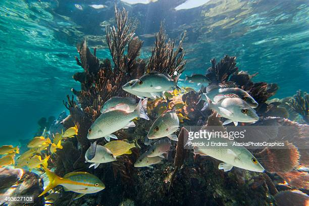 Coral and fish underwater at Laughing Bird Caye