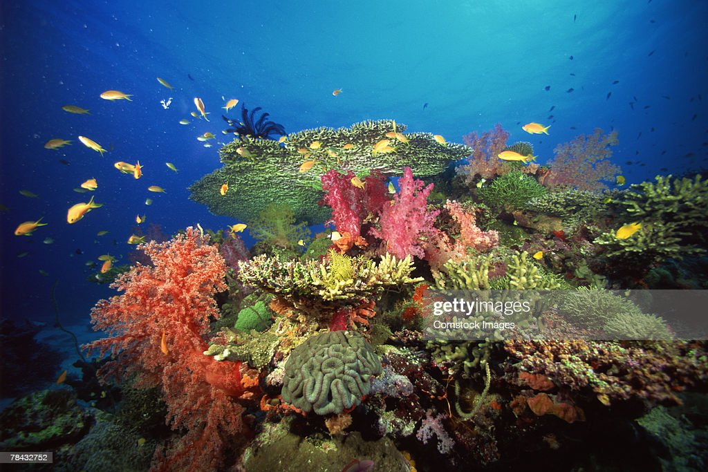 Coral and tropical fish : Foto de stock