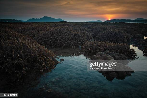 Coral area and sunrise in Tropical island