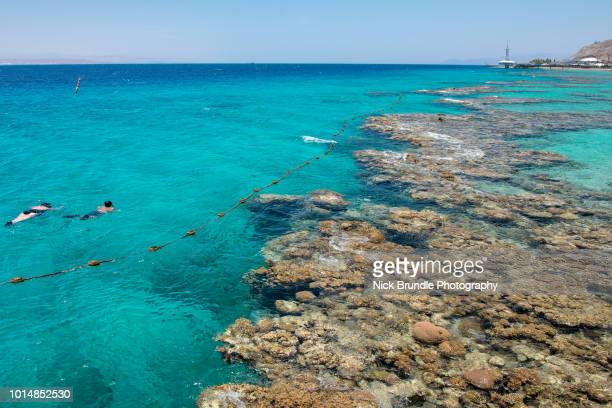 coral beach, eilat, israel - eilat stock pictures, royalty-free photos & images