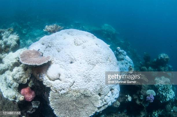 coral bleaching on the great barrier reef in australia - el nino stock pictures, royalty-free photos & images