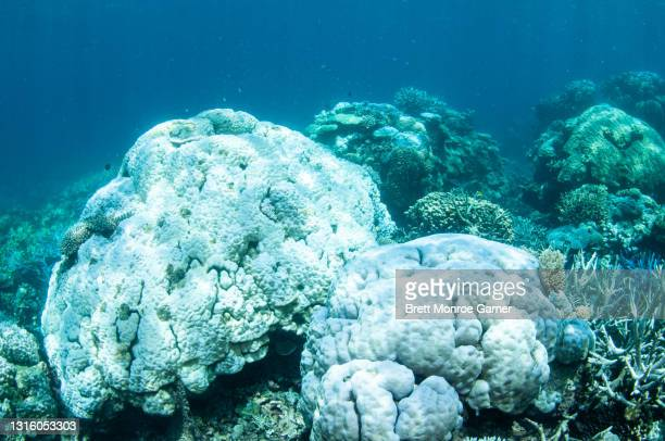 coral bleaching on the great barrier reef - death stock pictures, royalty-free photos & images