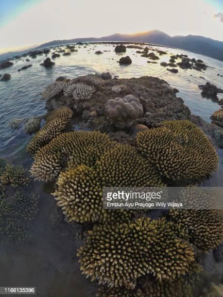 coral bleaching phenomenon - light natural phenomenon stock pictures, royalty-free photos & images