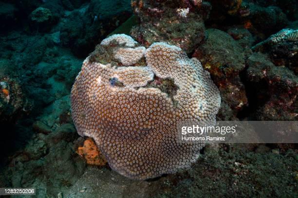 coral bleaching. - スクーバダイビングの視点 ストックフォトと画像