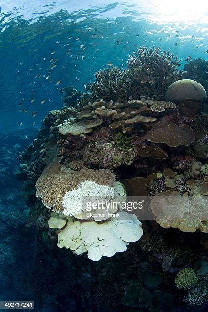 Coral bleaching.