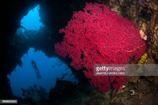 coral cavern - スクーバダイビングの視点 ストックフォトと画像
