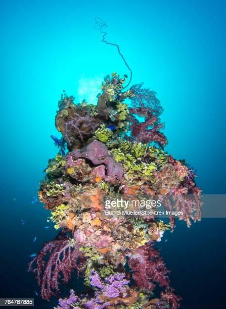 coral growth on a mast of the shinkoku maru shipwreck, truk lagoon, micronesia. - lagon chuuk photos et images de collection
