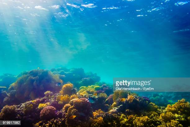 coral in sea - reef stock pictures, royalty-free photos & images