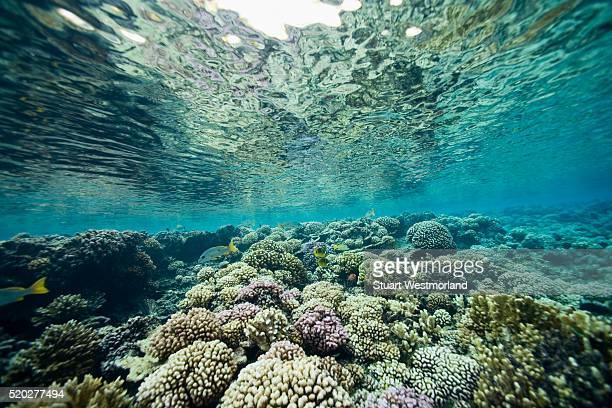 coral near fakarava island - フランス海外領 ストックフォトと画像