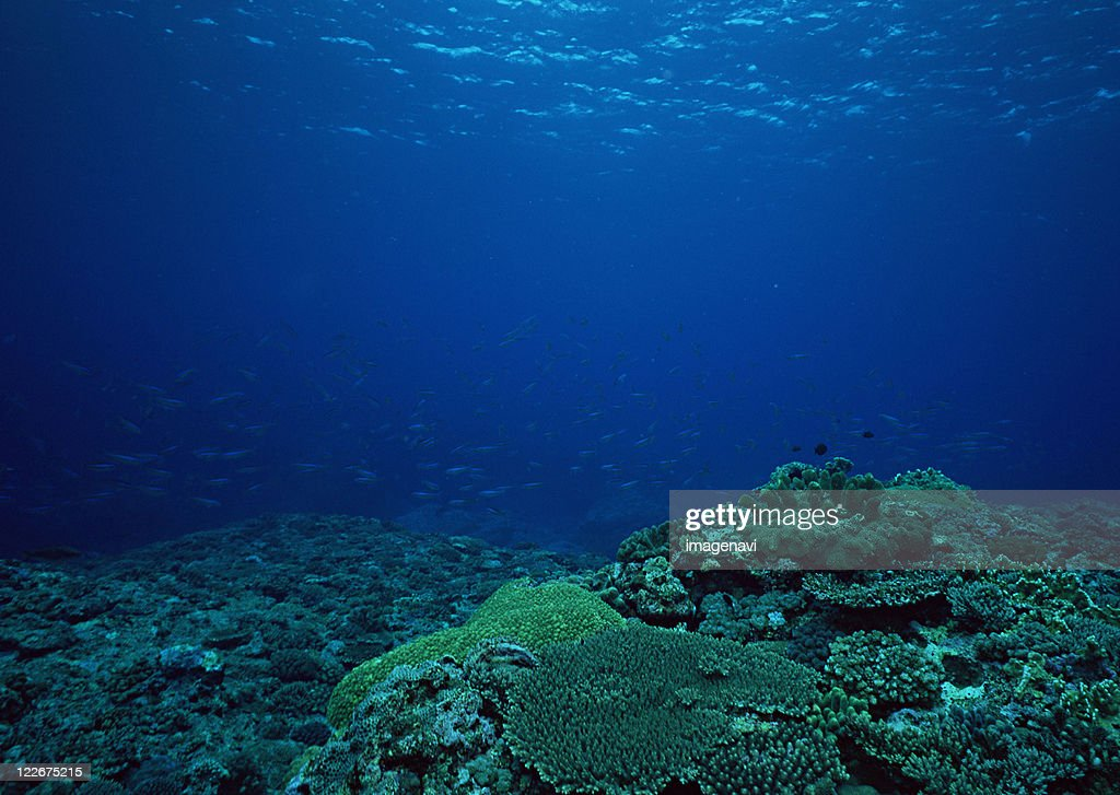 Coral : Stock Photo