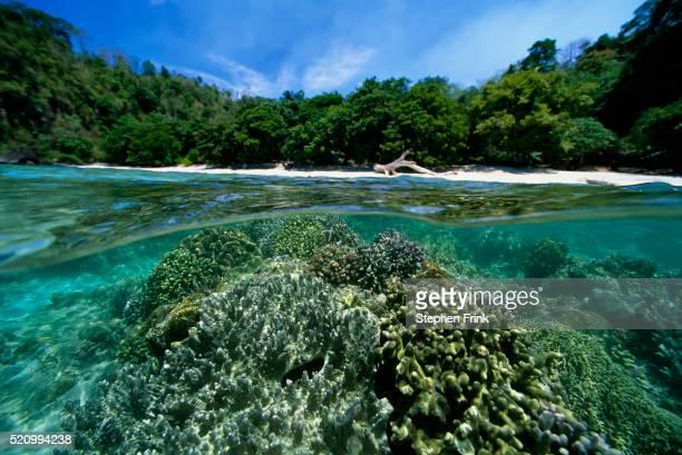 Coral Reef Along Manado