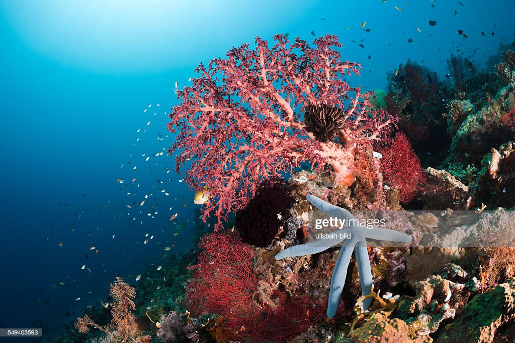 Coral Reef, Amed, Bali, Indonesia : News Photo