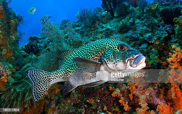 coral reef and fish - cdascher stock pictures, royalty-free photos & images