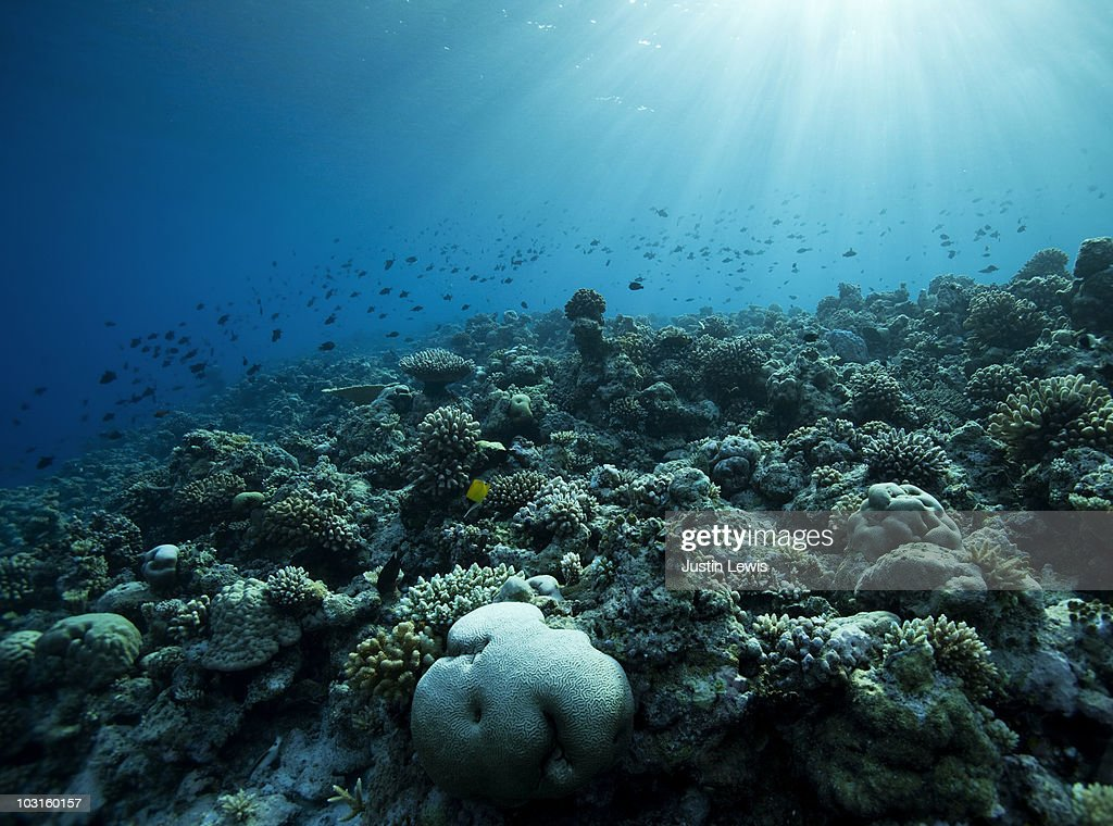 Coral reef and reef fish. Shot late afternoon. : ストックフォト