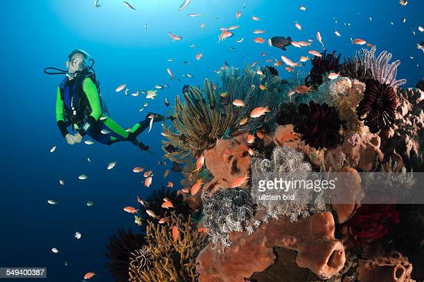 Coral Reef and Scuba Diver, Amed, Bali, Indonesia