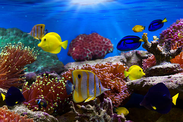 Free sea fish images pictures and royalty free stock for Reef tropical fish