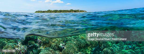 coral reef and water surface - 浅い ストックフォトと画像