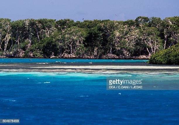 Coral reef Aves de Barlovento Las Aves archipelago Venezuela