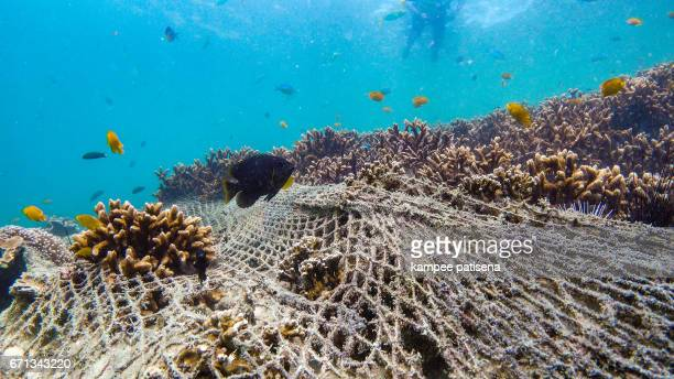 coral reef destroyed by fishing net