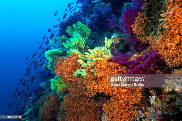 coral reef from lastovo island, croatia - sea life stock pictures, royalty-free photos & images