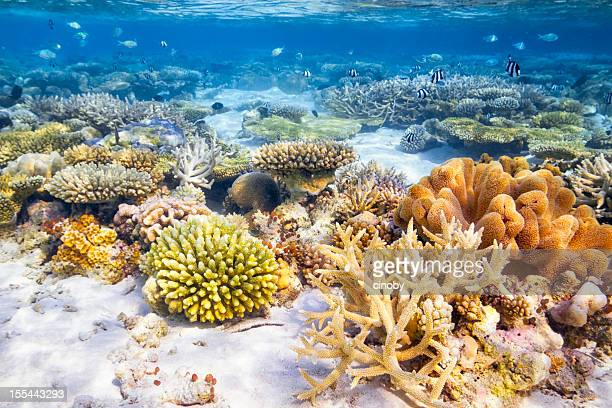 coral reef garden - reef stock pictures, royalty-free photos & images