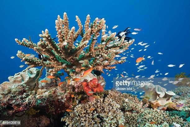 Coral Reef Gau Lomaiviti Fiji