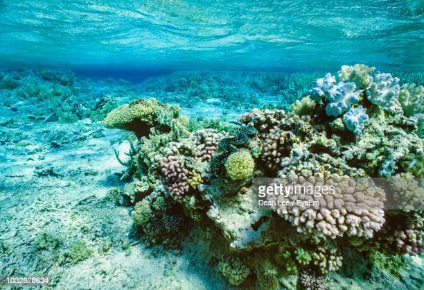 coral reef in sea - great barrier reef stock pictures, royalty-free photos & images