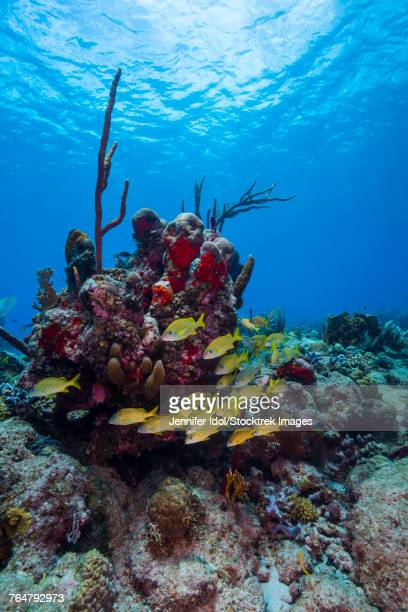 Coral reef in St. Croix, U.S. Virgin Islands.