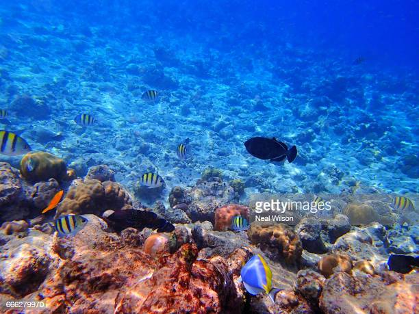 coral reef in the maldives - fonds marins photos et images de collection