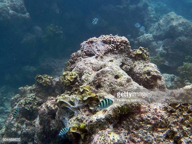 Coral Reef of the St. Anne Marine National Park, Seychelles