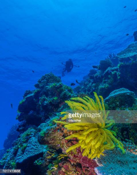 coral reef - cdascher stock pictures, royalty-free photos & images