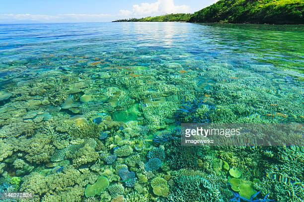 coral reef - western division fiji stock photos and pictures