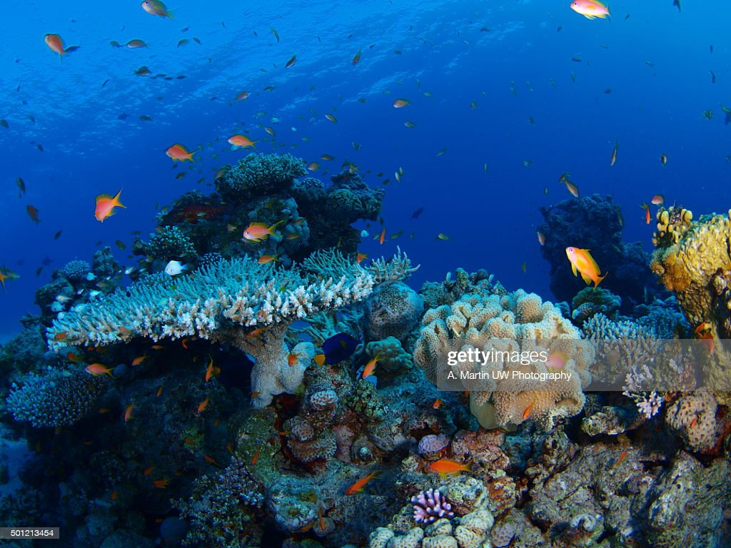 Coral reef : Stock Photo