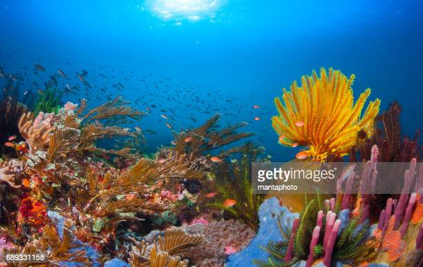 coral reef - reef stock pictures, royalty-free photos & images