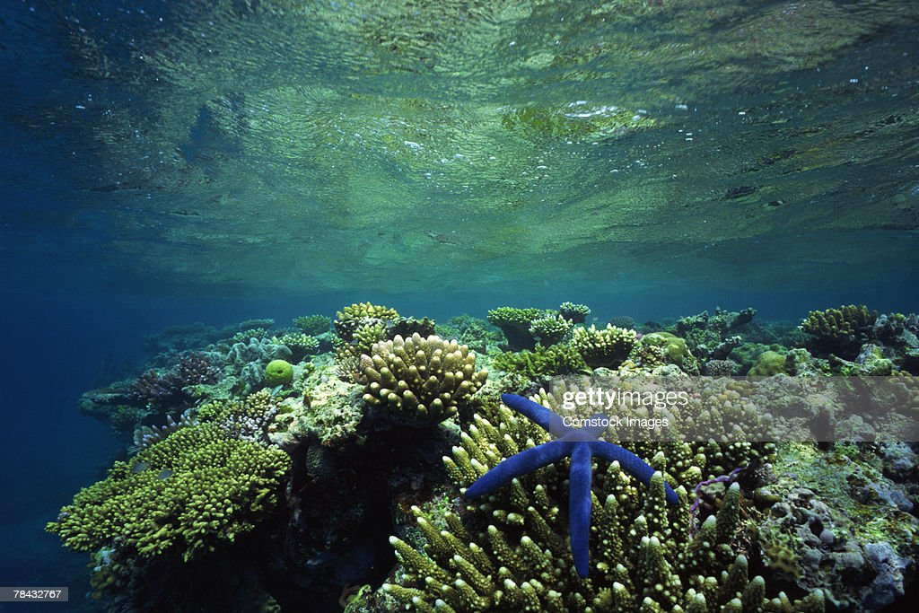 Coral reef : Stockfoto