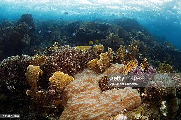 Coral reef - Red sea